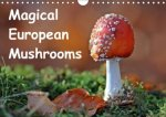 Magical European Mushrooms 2018