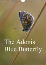 Adonis Blue Butterfly 2018