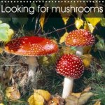 Looking for Mushrooms 2018