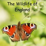 The Wildlife of England (Wall Calendar 2018 300 × 300 mm Square)