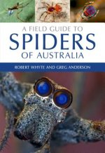 FGT SPIDERS OF AUSTRALIA