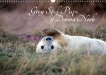 Grey Seal Pups of Donna Nook 2018