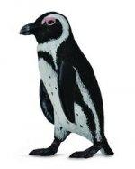 Pingwin przylądkowy S