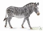 Zebra Grevys XL