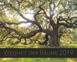 Das Wissen der Bäume 2019
