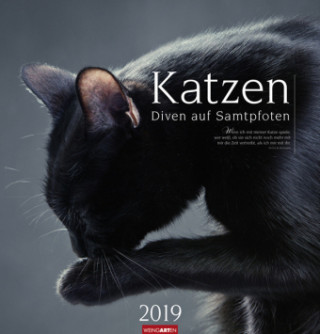 Katzen 2019