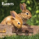 Rabbits 2019 Square Wall Calendar