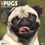 Just Pugs 2019 Wall Calendar (Dog Breed Calendar)