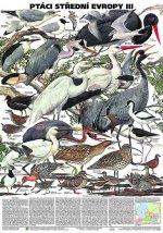 Plakát - Ptáci střední Evropy 3. díl