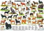 Plakát - Plemena psů I