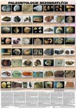 Plakát - Paleontologie bezobratlých