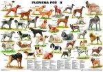 Plakát - Plemena psů II