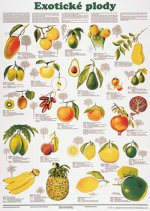 Plakát - Exotické plody