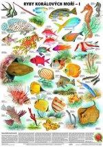 Plakát - Ryby korálových moří 1. díl