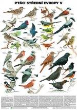 Plakát - Ptáci střední Evropy 5. díl (Pěvci 1)
