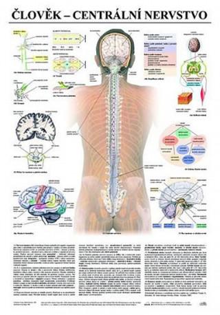 Plakát - Člověk - centrální nervstvo