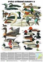 Plakát - Ptáci střední Evropy 2. díl