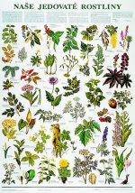 Plakát - Naše jedovaté rostliny