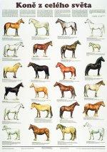 Plakát - Koně z celého světa
