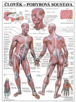 Plakát - Člověk - Pohybová soustava