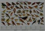 Plakát - Naši ptáci - pěvci