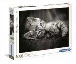 Puzzle 1000 Kotě