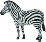 Zebra pospolita