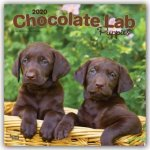 Labrador Retriever Puppies, Chocolate 2020 Square Wall Calendar