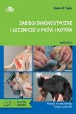 Zabiegi diagnostyczne i lecznicze u psów i kotów