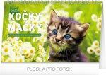 Stolní kalendář Kočky – Mačky CZ/SK 2020
