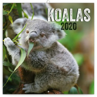 Poznámkový kalendář Koaly 2020
