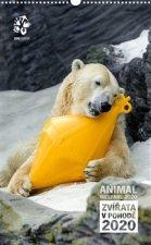 Nástěnný kalendář Zoo Praha 2020 - Zvířata v pohodě
