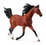 Koń arabski stallion bay