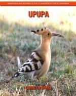 Upupa: Immagini incredibili e fatti divertenti per i bambini