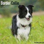 Border Collie 2021 Wall Calendar