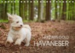 Havaneser - Herz aus Gold (Tischkalender 2021 DIN A5 quer)