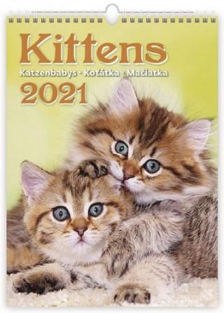 Kalendář 2021 nástěnný: Kittens/Katzenbabys/Koťátka/Mačičky, 240x330