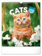 Kalendář 2021 nástěnný: Kočky, 30 × 34 cm