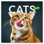 Poznámkový kalendář Kočky 2021