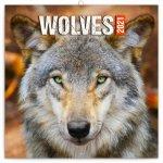 Kalendář 2021 poznámkový: Vlci, 30 × 30 cm