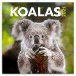 Poznámkový kalendář Koaly 2021