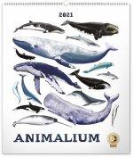 Nástěnný kalendář Animalium Lucie Jenčíková 2021