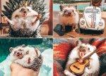 Herbee the Hedgehog 1000-Piece Puzzle