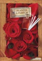 Plantes à parfums