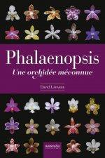 Phalaenopsis. Une orchidée méconnue