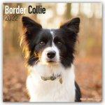 Border Collie 2022 Wall Calendar
