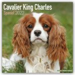 Cavalier King Charles Spaniel 2022 Wall Calendar