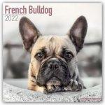 French Bulldog 2022 Wall Calendar