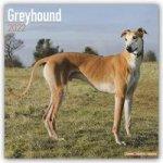 Greyhound 2022 Wall Calendar