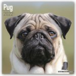 Pug 2022 Wall Calendar